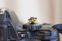 Wasp on a  program dial of digital camera Stock Photo