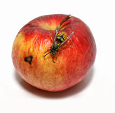 Wasp on a red apple Stock Photo