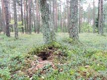 Wasp rede i skog Royaltyfria Foton