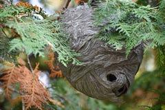 Wasp rede som hänger på trädfilial royaltyfri foto