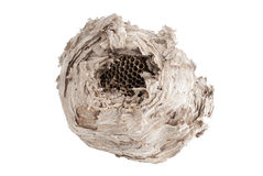 Wasp rede som isoleras på vit Royaltyfri Fotografi