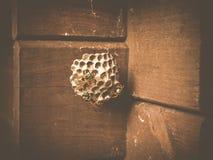 Wasp redeborttagning Fotografering för Bildbyråer