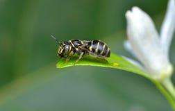 A wasp Stock Photos