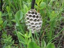 Wasp& x27; s-Nest Lizenzfreie Stockfotografie