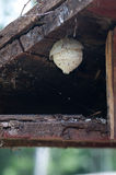 Wasp's Nest. Wasp nest below an old house ceiling Stock Image