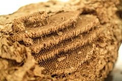 Wasp`s Nest Cell Detail. Wasp`s Nest Detail. Wasp Nest. Circular Design. Spiral Design. Insect Nest. Cell Detail stock images
