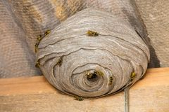 Wasp's nest closeup Royalty Free Stock Images