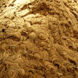 Wasp`s Nest Detail. Wasp Nest. Circular Design. Spiral Design. Insect Nest royalty free stock image