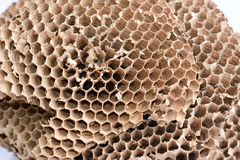 wasp's nest Royalty Free Stock Photo