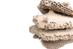 wasp's nest Stock Photos