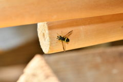 Wasp sitting in the nest macro Stock Image