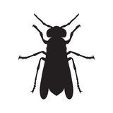 Wasp. Sketch of Wasp. Wasp  on white Royalty Free Stock Photos