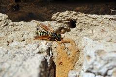Wasp som sitter på mjuk oskarp sandig bakgrundstextur royaltyfria bilder