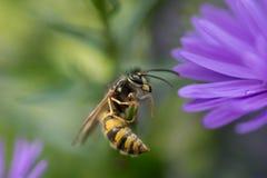 Wasp som vilar på en stam Arkivbild