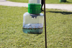 Wasp Trap Stock Photography