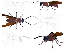 Wasp Vector 01. Dangerous Wasp Isolated Illustration Vector Stock Photo