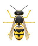 Wasp. Vector glossy wasp on white background, eps 10 file, gradient mesh and transparency used Stock Photography