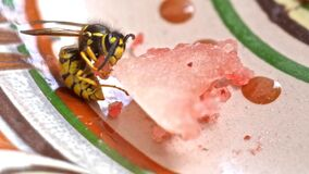 wasp vs. melon Royalty Free Stock Photography