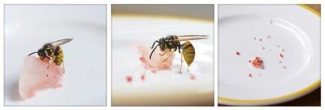 wasp vs. melon Royalty Free Stock Photos