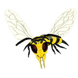 Wasp on white background. Vector illustration flying wasp on white background Stock Photos