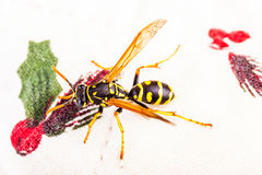 Wasp on a white tablecloth Stock Photography