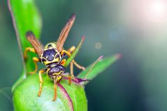 Wasp in the wild stock photo