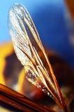Wasp wing Royalty Free Stock Photo