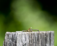 Wasp on wooden post royalty free stock images