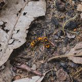 wasps Royaltyfri Bild