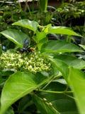wasps Arkivfoton