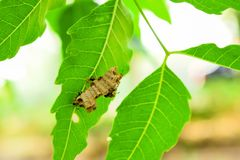 Wasps built their nest on the leaves. Wasp helps to clean the nest and protect its nest from the trellis that will destroy its nest royalty free stock photos