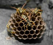 Wasps on comb Royalty Free Stock Photography