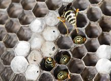 Wasps on comb. In the park in nature Stock Photos