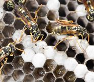 Wasps on comb. In the park in nature Stock Image