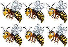 Wasps with different emotions Stock Photo