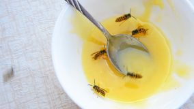 Wasps eat golden honey from a plate that stands on a table in the open air. Bugs suck sweet nectar