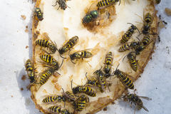 Wasps on the fruits Royalty Free Stock Photography