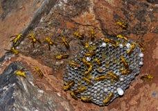 Wasps at hive Stock Image