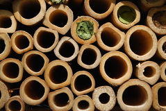 Wasps house. Wasps or bee house in a form of tubes Stock Photo