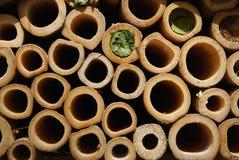 Wasps house Stock Photo