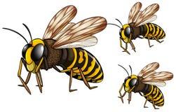 Wasps. Illustration of three wasps flying Royalty Free Stock Images