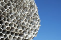 Wasps' nest Royalty Free Stock Image