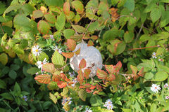 Wasps nest in bush stock photography