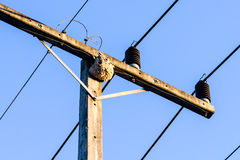 Wasps in the nest. On the electrical line Royalty Free Stock Photography