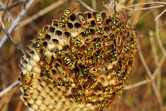 Wasps nest in the grass Stock Image