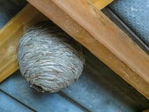 Wasps nest, twisted under the roof in the barn. royalty free stock photos