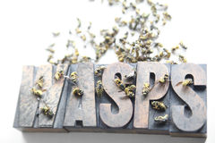 Wasps word with dead and dying yellow jackets. Yellow jacket wasps on and around the word 'wasps' in old wood type stock photo