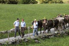 Wassen, die Schweiz, am 15. September 2018: Zeremoniell, das unten vom Vieh fährt stockfotografie
