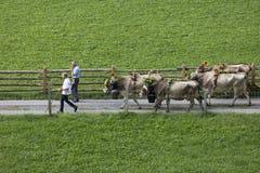 Wassen, die Schweiz, am 15. September 2018: Zeremoniell, das unten vom Vieh fährt stockbild