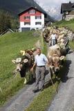 Wassen, die Schweiz, am 15. September 2018: Zeremoniell, das unten vom Vieh fährt stockfotos